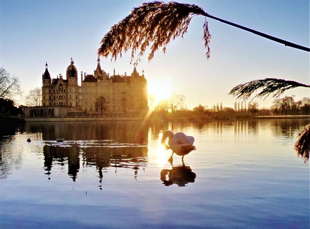 Blick übers Wasser zum Schweriner Schloss mit einem Schwan im Vordergrund